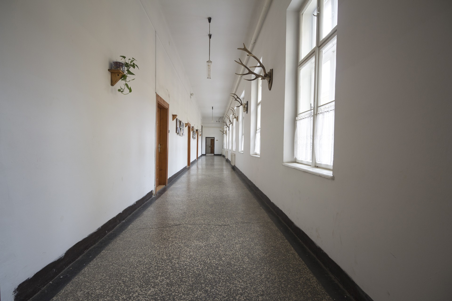 Erdészcsillag Hostel